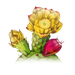 pricklypear_contrast.png