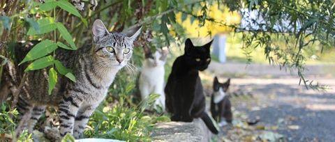 feral-cats-sitting (2).jpg