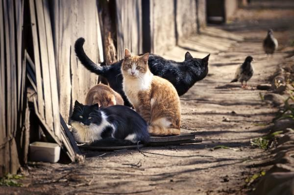 Cats_Sitting_Next_to_Wooden_Fence_grande.jpg