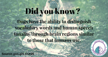Did you know-.png