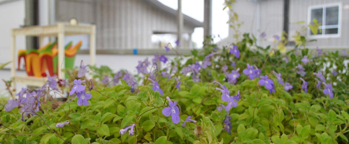 AS_flowering_plants.jpg