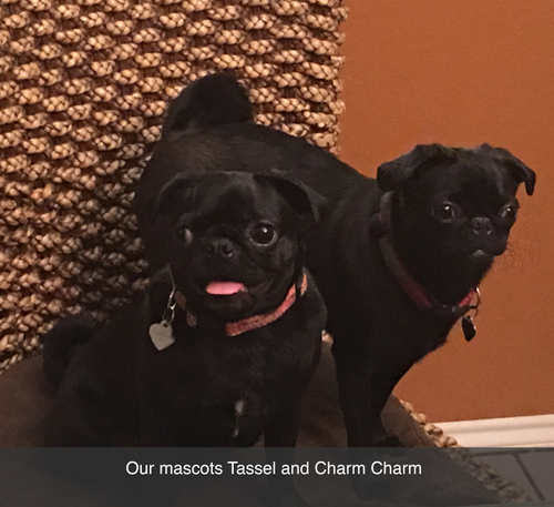 Local Austin gallery home to pugs