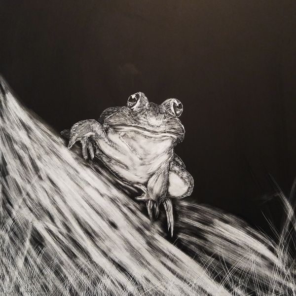 Local Austin artist Frog on a Log by Connor Teseny.jpg
