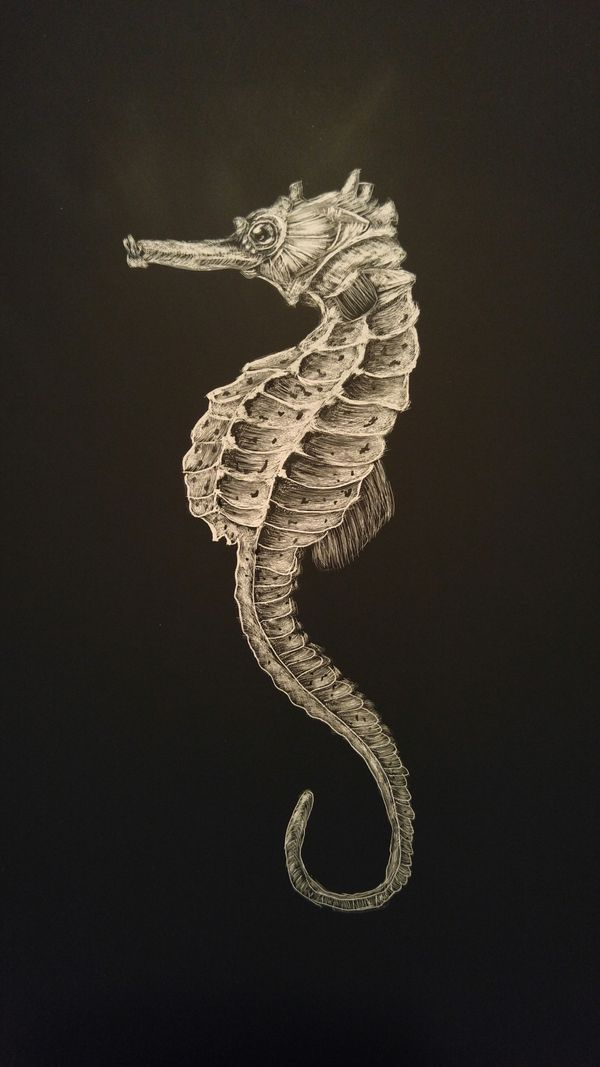 Local Austin artist Seahorse by Connor Teseny.jpg
