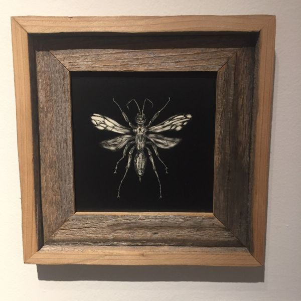 Tarantula Haw- Connor Teseny - Local Austin Artist.jpeg
