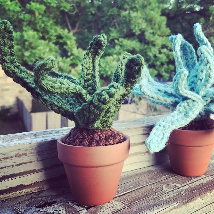 6_Jessica_Williams_Succulents_Austin Art_Austin Artist_Austin Gifts.JPG
