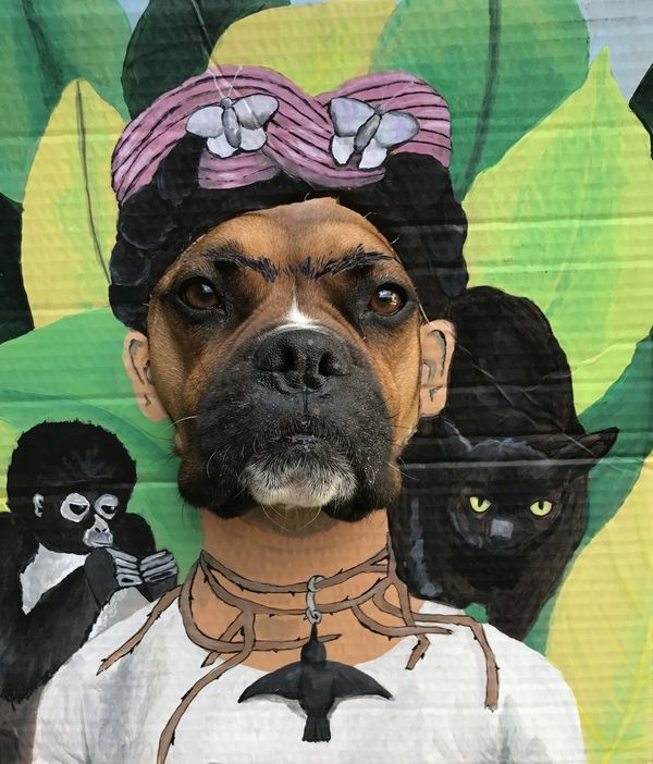 Local Austin artist Fridog Kahlo by Katie Stahl.jpg