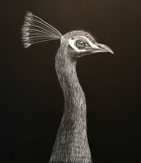 Local Austin artist Peafowl by Connor Teseny.jpg