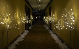 props winter trees.jpg