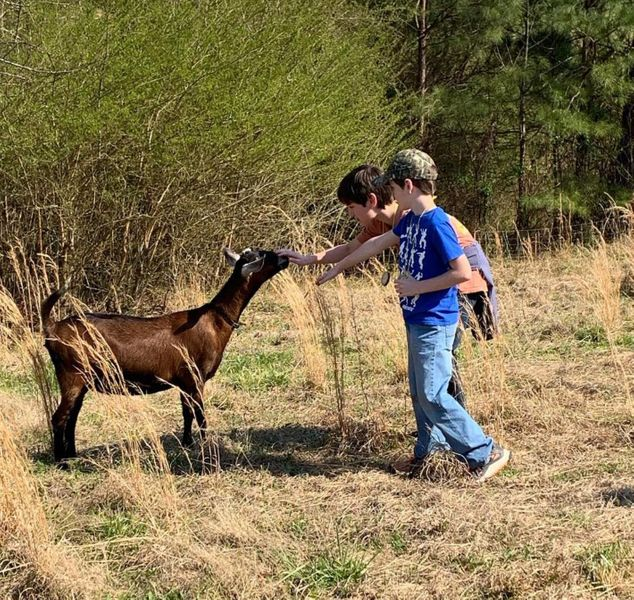 goat grass.JPG