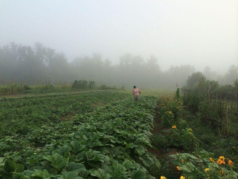 andrew farm.jpg