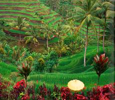 Tramex Bali 05
