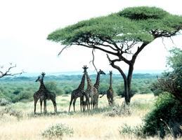 Tramex Africa 01