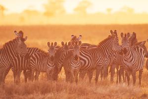 Tramex Africa 03