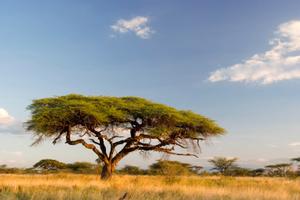 Tramex Africa 02