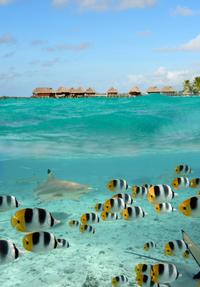 Tramex Bora Bora 01