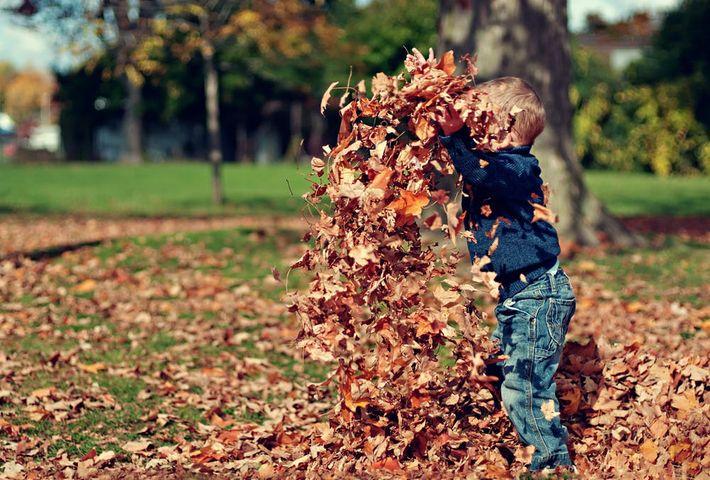 Fall 6.jpeg
