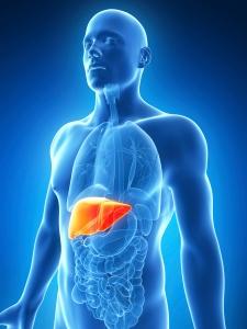 Hepatitis-C-liver-225x300.jpg