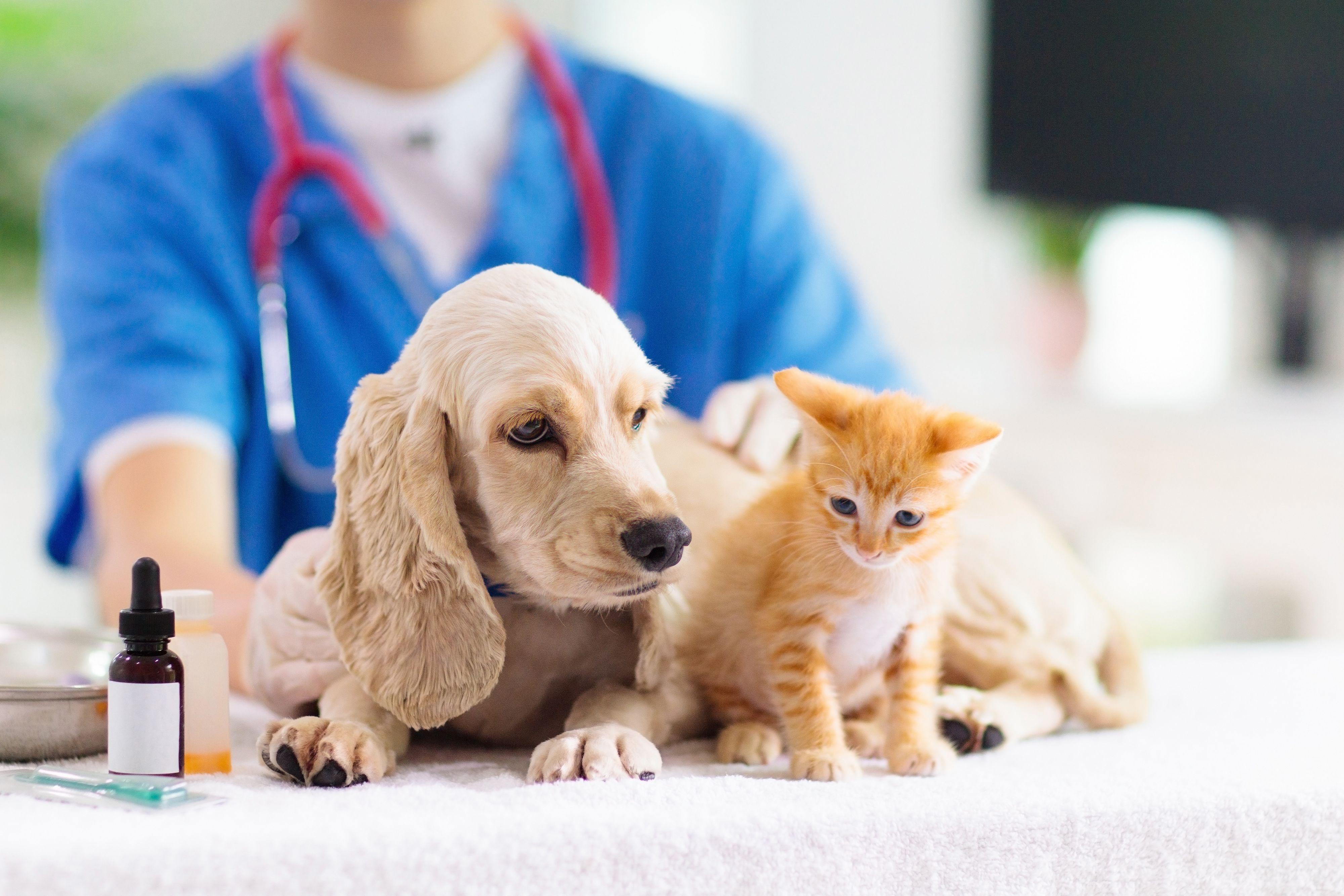 Pet Compounding