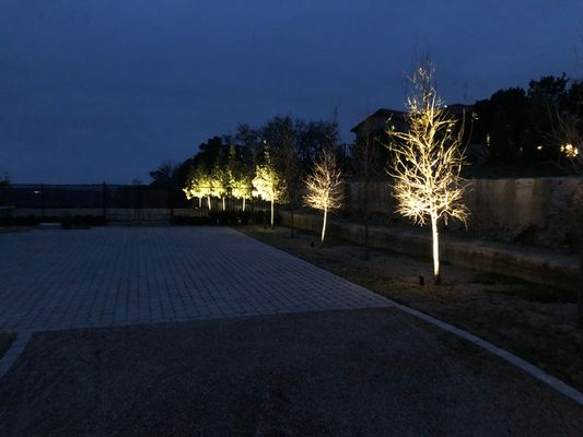 Trees lit by landscape lighting